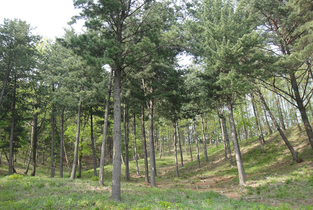 국민 44.2 선호' 수목장의 미래는 밝다